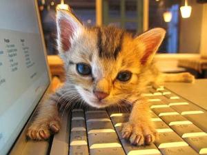 catkeyboard