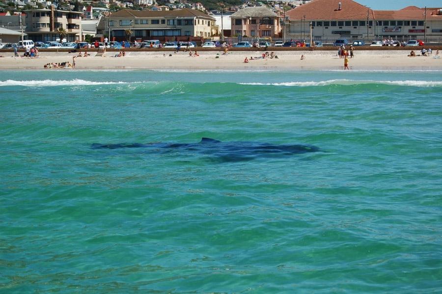 Fatal Shark Attack In Fish Hoek Gets Twittered Tweeted Life Is Savage